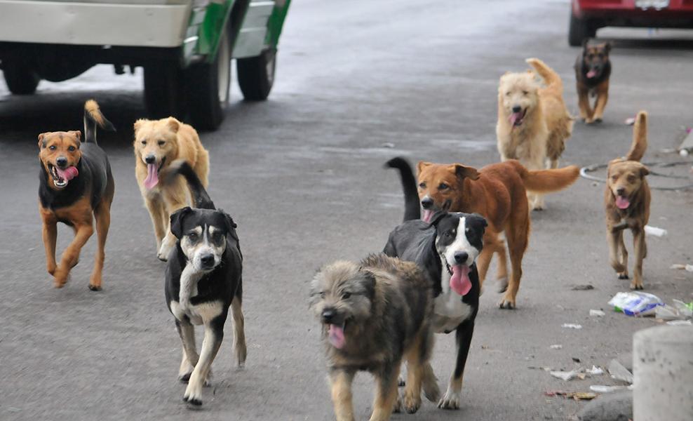 Protegen regidores a los perros, se van contra las aves en plazas