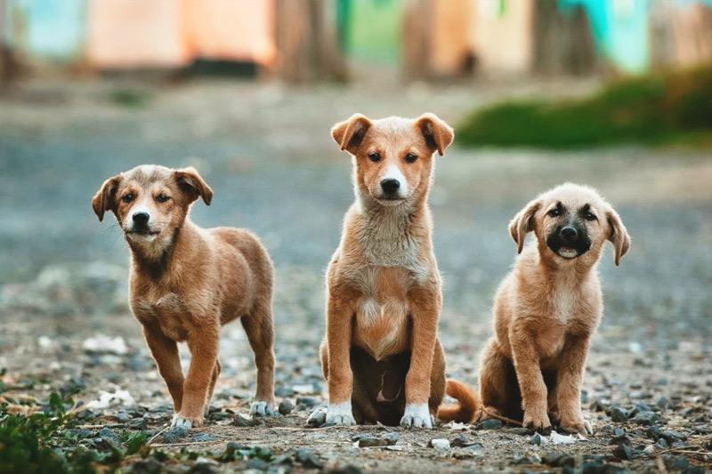 Proponen comisión de Bienestar Animal