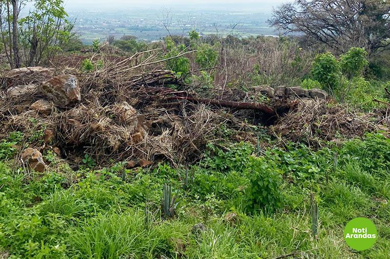 Denuncian ecocidio en Cerro Gordo